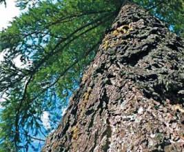 Работа с деревом. Кровля из гонта лиственницы: конструктивные особенности. Решение технических задач. Примеры из практики