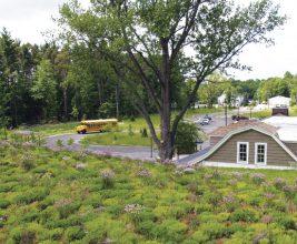 IGRA на крыше. Международная Ассоциация «зеленых» крыш